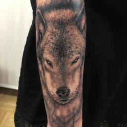 black grey wolf tattoo on arm